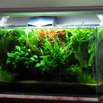 Aquário Plantado (84L) de Fabricio Rufino