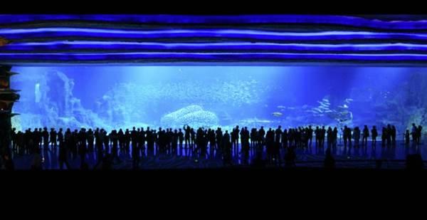 china-aquario