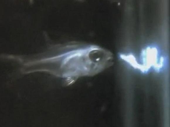peixe-cospe-luz-noticias