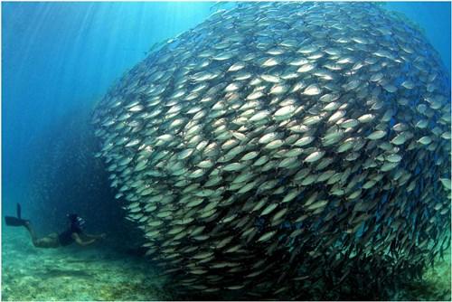 school-fish