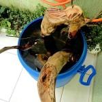 Tratamento de troncos
