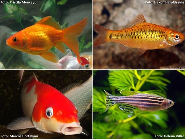 coldfish00