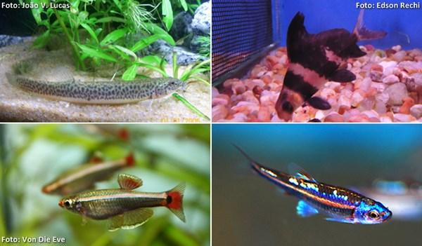 coldfish01