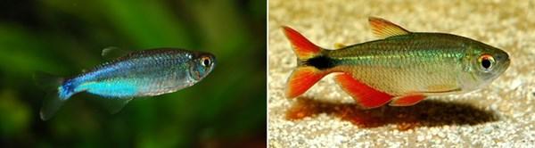 coldfish02