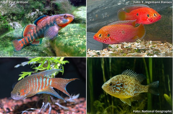 coldfish04