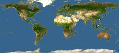 Osphronemus laticlavius-map