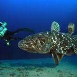 Pesquisadores descobrem pulmão em peixe 'pré-histórico'