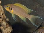 "Japoneses descobrem peixe que identifica ""rostos"""