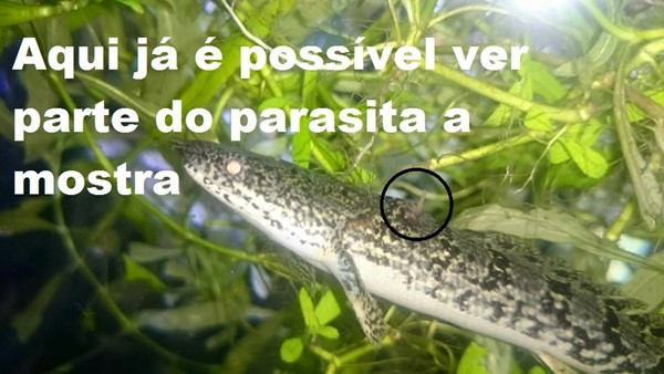 parasita01