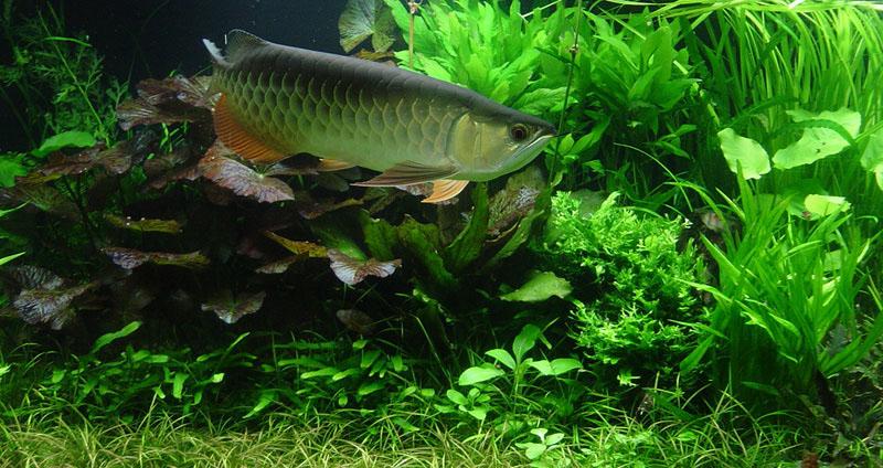 plantado-jumbo5