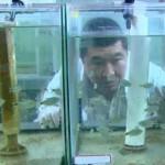 Técnica reproduz peixes em extinção através de 'barriga de aluguel' em SP