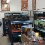 Lojas de aquarismo: Top Tropical Fish (São Paulo)