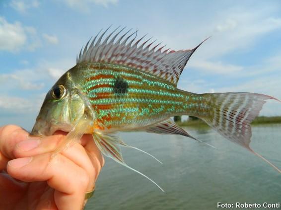 Foto da pescadora Maraísa Ribeiro do site Peixe Solto