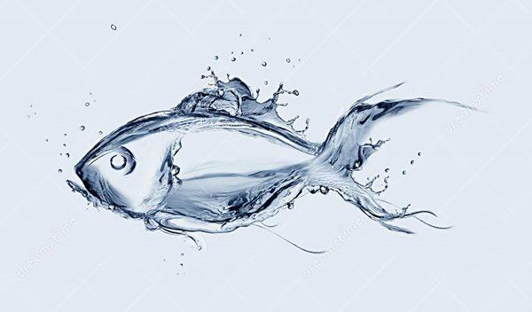 water-fish