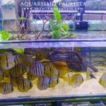 Top Tropical Fish