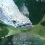 MT deverá ter o 1º criatório de peixe licenciado