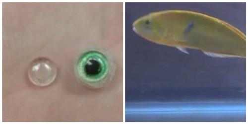 protese-fish2