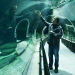 Maior aquário da América do Sul deve ser inaugurado em novembro, no Rio