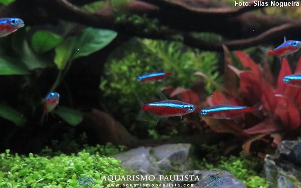 00-plantado-silas-nogueira1
