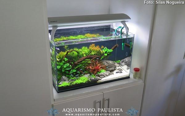 00-plantado-silas-nogueira2