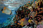 Excesso de pesca ameaça animais marinhos maiores