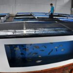 Aumento do número de peixes ainda não recupera perdas do Aquário do Pantanal