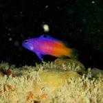 Peixes ameaçados de extinção são achados na Piscina do Amor, em Maceió
