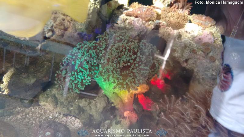 marinho-hamaguchi5