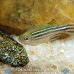 peixes-iniciantes01