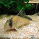peixes-iniciantes02