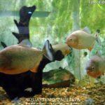 peixes-iniciantes06