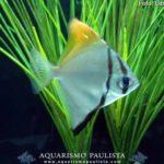 peixes-iniciantes07