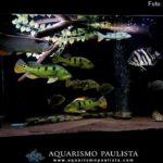 Aquário de peixes jumbo de Gledson Henriques