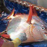 Peixe de sangue quente
