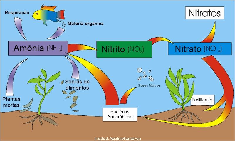 Nitrogen Cycle Apa