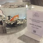 Hotel oferece aluguel de peixes para hóspedes carentes
