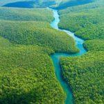 Mais de noventa espécies de peixes foram descobertos na Amazônia nos últimos dois anos