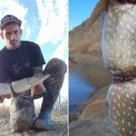 Peixe cresce espremido por anel plástico de bebida isotônica