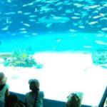 Mais de 1.200 peixes morrem em aquário por falta de oxigênio