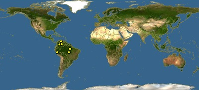 Hemigrammus-rhodostomus-map