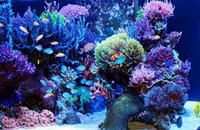 aqua-reef
