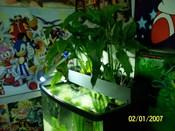 filtragem-PlantFilter
