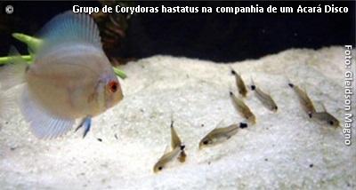 rep-cory04