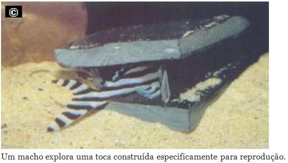 rep-zebra3
